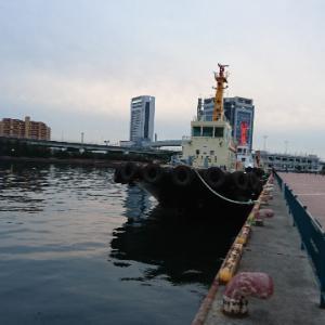 【海釣り】2019年12月21日 泉大津市なぎさ公園