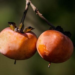 【旬は8月~11月】柿x健康x美容x美味しい料理【果物】