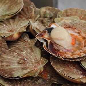 【食】ベビーホタテ/ホタテ/ホタテの貝柱を食べつくす【海の幸】