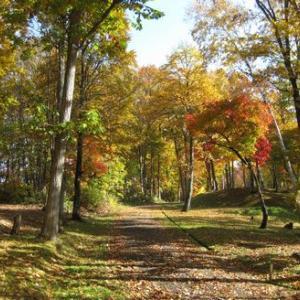 紅葉に誘われ里山を歩く