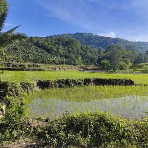 フィリピン田舎療養
