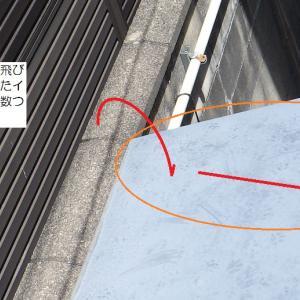 イタチの侵入経路完全解説!増築のすき間は要注意。芦屋市でのイタチ駆除現場。