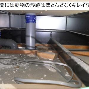 イタチの侵入口。床下換気口の隙間はよく調べないと見落とします!