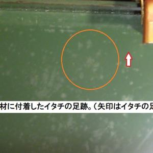 イタチの侵入口探しのポイントは、すき間や穴の周囲に形跡が「ある」か「ない」かが重要です