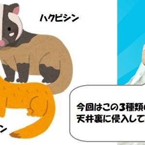 ハクビシン・テン・アライグマ。3種類の害獣が家屋侵入する滋賀県大津市の防除施工。【徹底解説版】