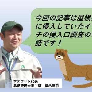 イタチがその他の害獣と違って完全防除が難しい理由を教えます!