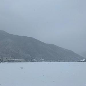 兵庫県宍粟市のイタチ防除と久しぶりのブログ更新。