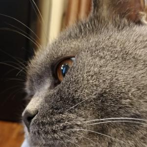 ダニエルのおめめ / The shining eyes