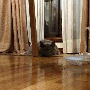 獲物を狙うダニエル/He is to track down one's prey