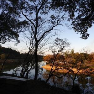 大池公園を散歩中①