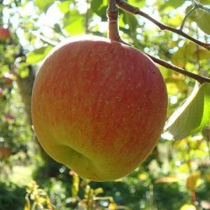 秋の中央道とりんご狩り 2019.11.16