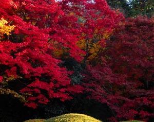 詩仙堂の紅葉と庭園が綺麗なので紹介したい