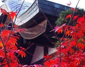 圓光寺の十牛之庭の紅葉が綺麗なので紹介したい