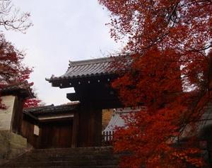 曼殊院門跡の枯山水庭園と門前のもみじ並木が綺麗なので紹介したい