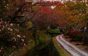 哲学の道の紅葉と法然院の紅葉が綺麗なので紹介したい