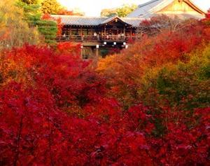 東福寺通天橋の紅葉と光明院の波心庭が綺麗なので紹介したい