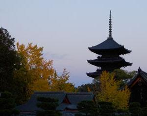 東寺の紅葉と五重塔が綺麗なので紹介したい