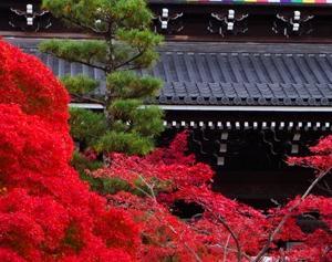 金戒光明寺の紅葉と庭園が綺麗なので紹介したい
