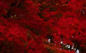 真如堂の紅葉と二つの枯山水庭園が綺麗なので紹介したい
