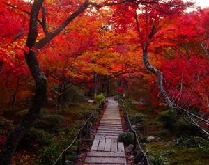 宝筐院の紅葉と枯山水の川が綺麗なので紹介したい
