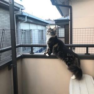 猫のベランダ落下防止柵設置