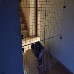 ペットの脱走防止柵〜クーの身体能力アップに伴い高さ2倍に増量