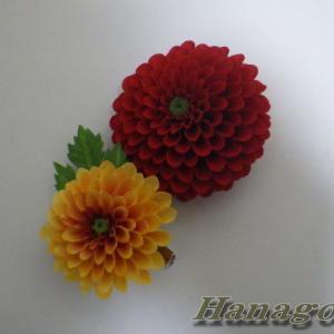 ライジングサンのような真紅の菊