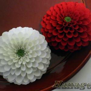 即位礼~紅白のポンポン菊で祝
