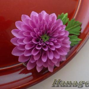 「再販」ミニぽんぽん菊(赤紫)Creemaに出品