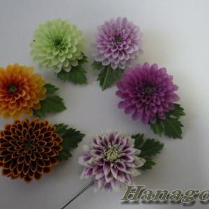 ハンドメイドアクセサリ~ダリア似のぽんぽん菊です