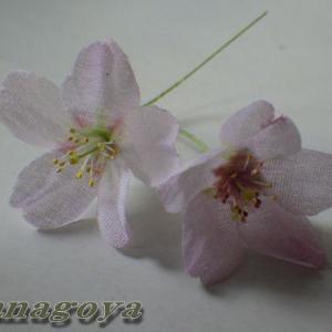 江戸彼岸桜の花2輪~メチャカワイイ~