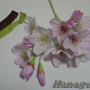 可愛い江戸彼岸桜とミモザの在庫危機