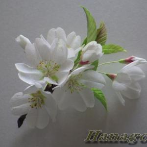 染井吉野ファミリ~大島桜のコサージュ出品