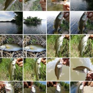 魚は回遊気味、そして怒涛のコバス連打