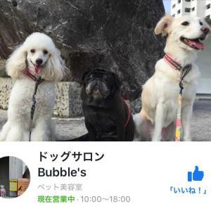 石垣島ドッグサロンBubble'sさまに国産プレミアムドッグフード&ドッグスパシャンプー納品出荷いたしました。