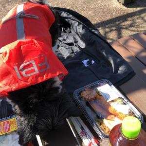 久しぶりに愛犬ちゃんとランチピクニック