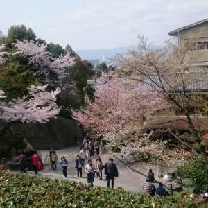 京都に行きました①