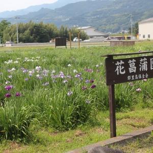 花菖蒲園 パート1