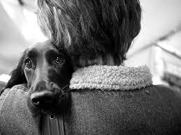 愛犬は忘れた頃にやってくる