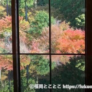 唐津市の環境芸術の森で屏風絵のような紅葉と散策を楽しんできました