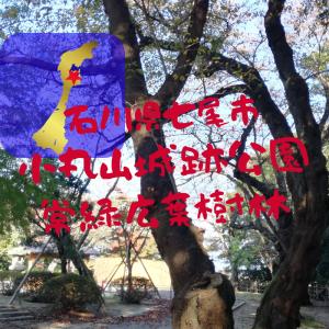 【石川】七尾市・小丸山城跡公園常緑広葉樹林