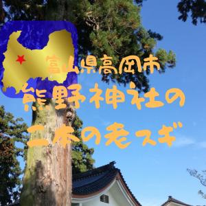 【富山】高岡市戸出吉住・熊野神社の二本の老スギ