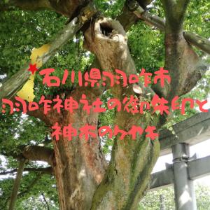 【石川】羽咋市・羽咋神社の御朱印と神木のケヤキ