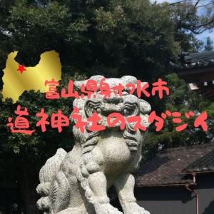 【富山】射水市・道神社のスダジイ