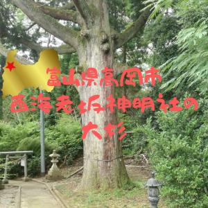 【富山】高岡市・西海老坂神明社の大杉