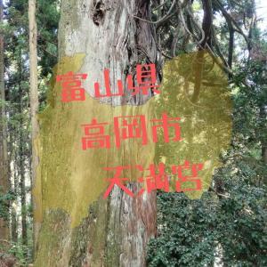 【富山】高岡市境・天満宮の不思議なスギ