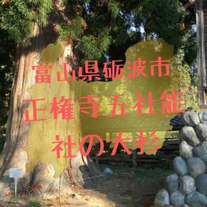 【富山】砺波市・正権寺五社能社の大杉