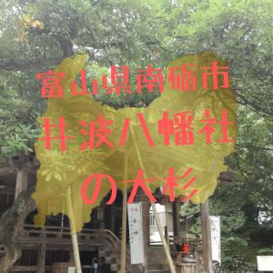 【富山】南砺市・井波八幡宮の大杉