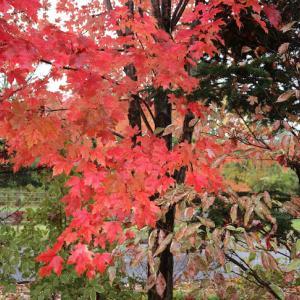 【日本:軽井沢②】雨の日の軽井沢。雨の日もまた、良き。
