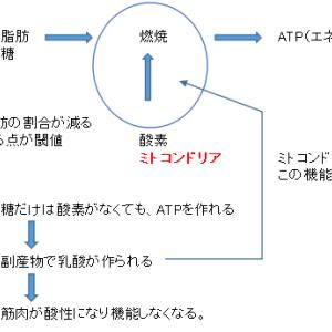 ソンナバナナ 推奨練習 その3-1(体内エネルギーの理論:ATPについて)